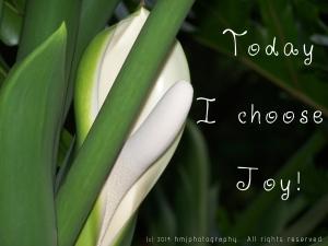 Praise Gratitude and Joy!